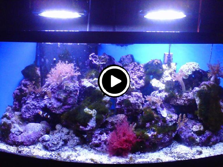 Fish tanks for the home - Cool Fish Tanks Rooms Our Fish Room Features Over
