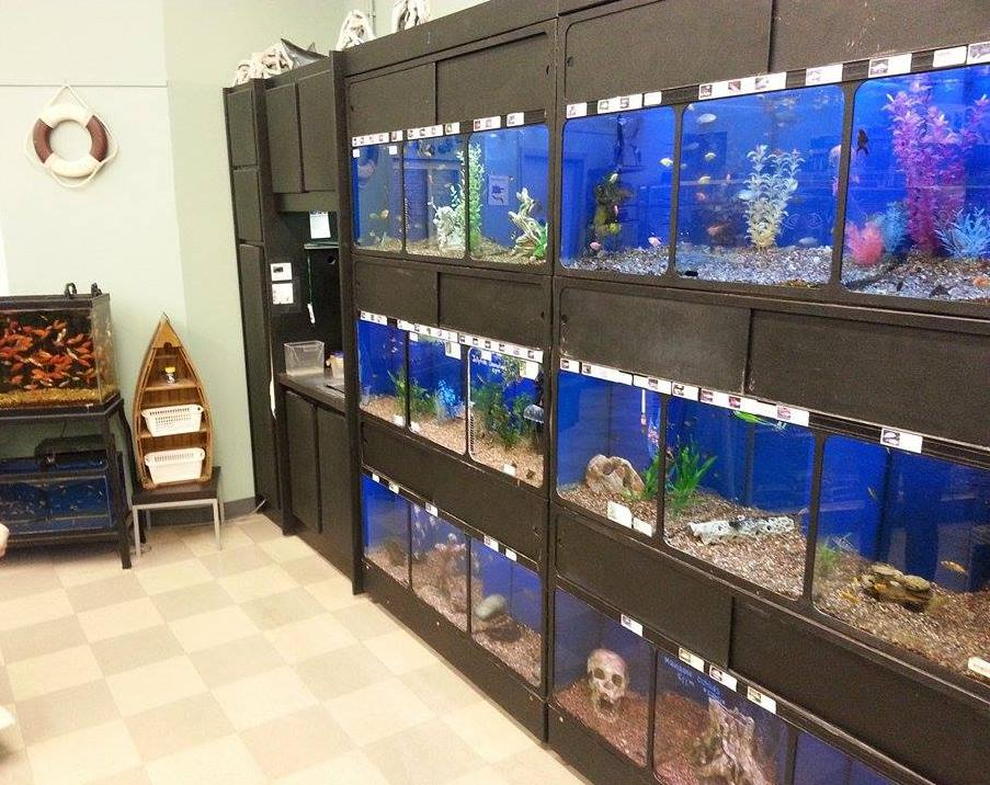 Tropical fish 566 randall road south elgin illinois for Exotic fish store